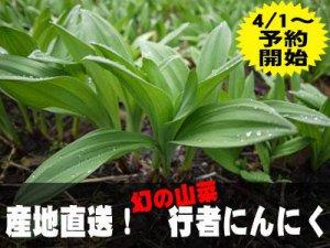 【行者にんにく、4/1(火) より予約受付開始!】:画像