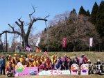 【花咲けオープニングイベント〜釜の越桜&さくら通信。*+】:画像