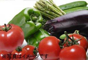 【新登場!おまかせ電子野菜セット】:画像
