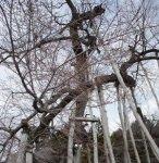 【久保桜今の表情】:画像