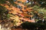 【紅葉真っ盛り!長井の秋いろいろ】:画像