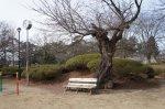 【春を探して 〜 長井】:画像
