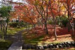 【晩秋の街なか風景】:画像