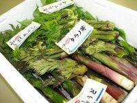 【おまかせ山菜セット 予約受付中!】:画像