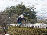 【春を迎える準備 〜さくら通信〜】:画像