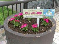 【町なかを花で飾って】:画像