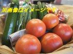 【旬をお届け!夏野菜セット】:画像