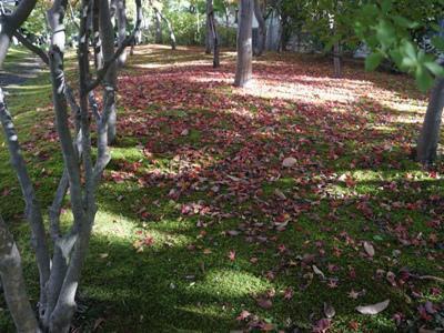 【紅葉に染まる「やませ蔵」】:画像