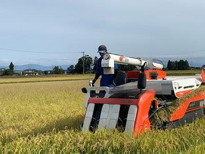【稲刈り最盛期を迎えています】:画像