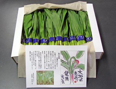 【幻の山菜『行者にんにく』予約承り中♪】:画像