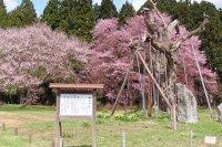 【花咲けオープニングイベント IN 白鷹町】:画像