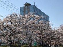 【春爛漫】:画像