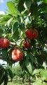 仲野観光果樹園 〜Fruit's cafe Rulave〜 ..:画像