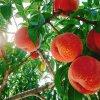 仲野観光果樹園 〜Fruit's cafe Rulave〜 でございます。:写真