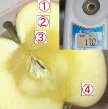 山の学校がお答えする…リンゴのハテナ?�:画像