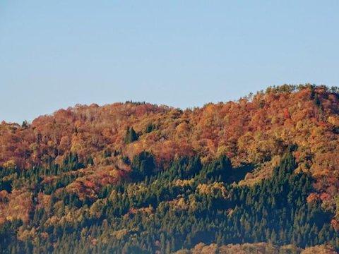 なでら(斜平)山の紅葉:画像