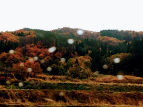 雨の車中から:画像