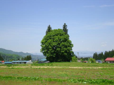トトロの森(李山):画像
