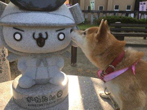 「かねたん」と「柴犬ハル」のツーショット:画像