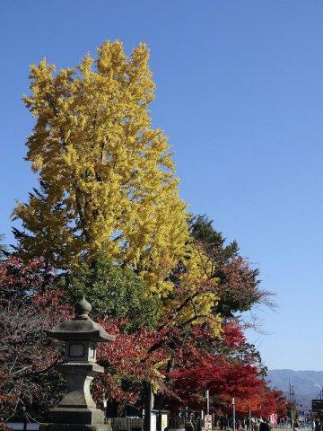 在表参道,松岬神社之前:图片