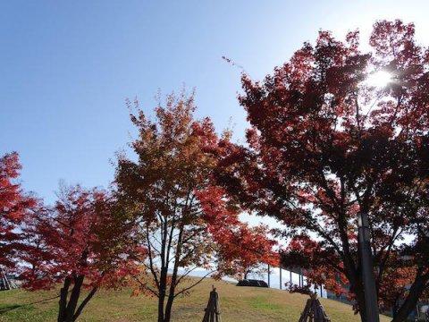 传国家的杜前広場的红叶:图片