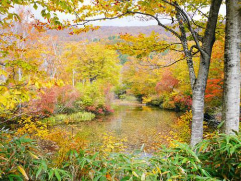 沼の真ん中に浮かぶ小島からのショット!:画像