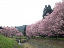 桜まだまだいけますね〜:画像