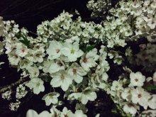 春の開花リレー:画像