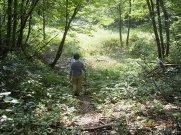 駒ケ岳中腹の沼:画像
