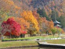 安久津八幡神社の紅葉:画像