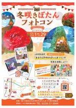 冬咲きぼたんフォトコン開催:画像