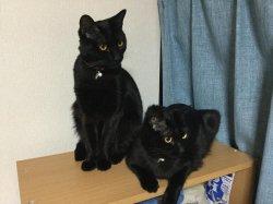 おすまし黒猫姉妹:写真