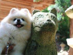 犬の宮の狛犬さんと:写真