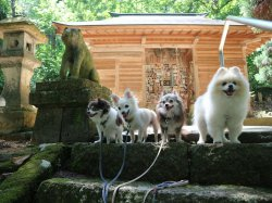 犬の宮:写真