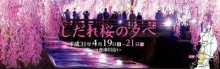 倉津川沿いしだれ桜ライトアップ:画像