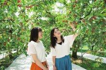 天童市観光物産協会推奨果樹園:画像