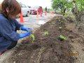 【豊田地区公民館花壇の花植え】をしました。:画像