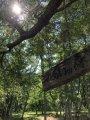 豊田地区の【ふれあいの森】:画像