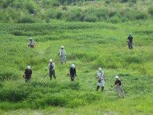 豊田地区【チームとよだ草刈り作業】:画像