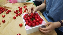 NO5 東根産…赤い宝石/サクランボの箱づめ:画像