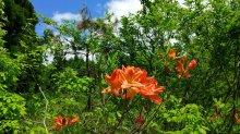 花が伝える季節:画像