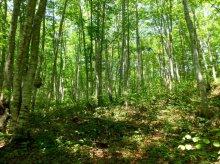 森を守る:画像
