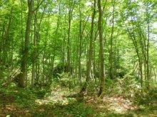 森を生きる:画像