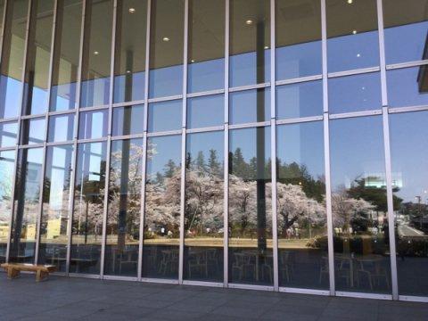 2015-4-23 伝国の杜に映る桜:画像