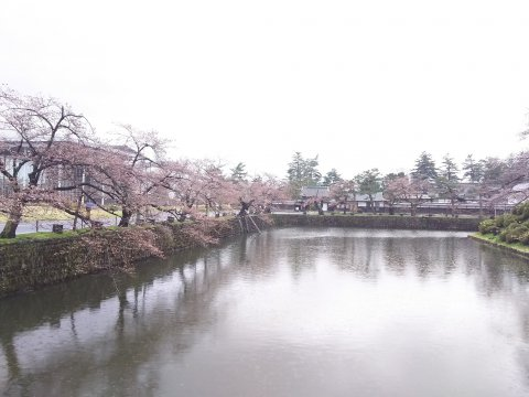 御堀沿いの桜:画像