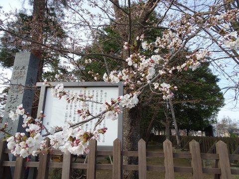 2018-4-10  咲き始め:画像