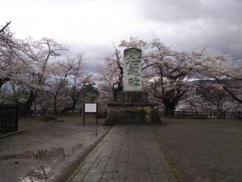 招魂碑(樹齢130年以上の桜):画像