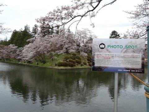 2018-4-14 三分から五分咲き(松が岬公園):画像
