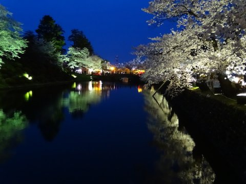 2018-4-17 夜桜:画像