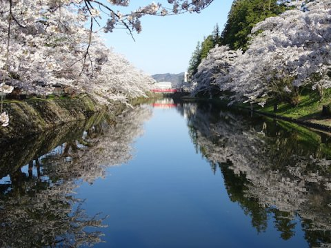 2018-4-19 桜は見頃です。:画像